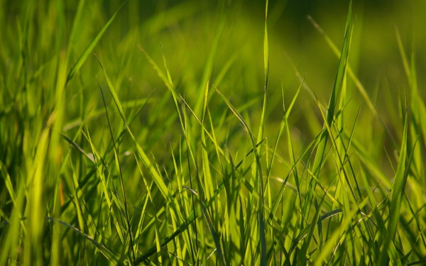 Spring_Grass_Wallpaper_Pack_by_Ythor