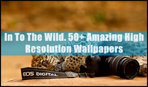 wild life wallpapers (1)