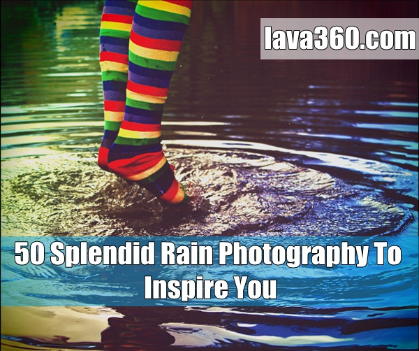 50 Splendid Rain Photography To Inspire You