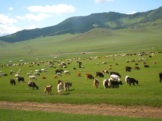 Trip to Magical & Thrilling Mongolia (9)