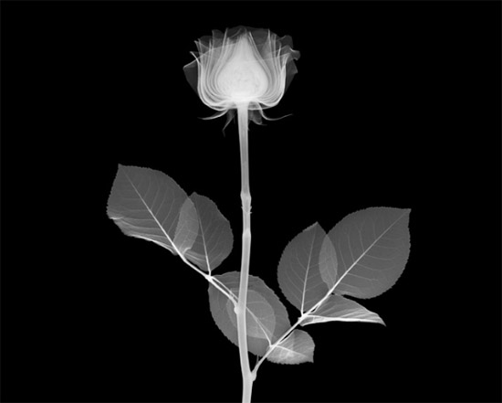 nickveasey xrayphoto1 Absolutely Amazing X Ray Photography By Nick Veasey