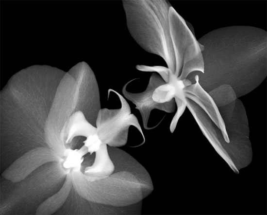 nickveasey xrayphoto3 Absolutely Amazing X Ray Photography By Nick Veasey