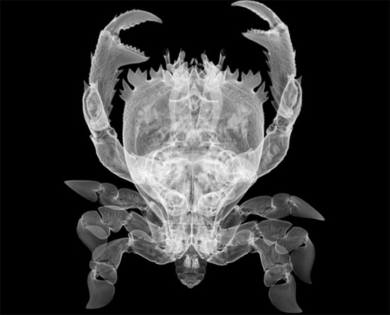 nickveasey xrayphoto41 Absolutely Amazing X Ray Photography By Nick Veasey