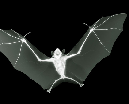nickveasey xrayphoto47 Absolutely Amazing X Ray Photography By Nick Veasey