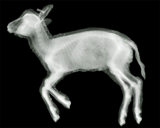 nickveasey xrayphoto49 Absolutely Amazing X Ray Photography By Nick Veasey