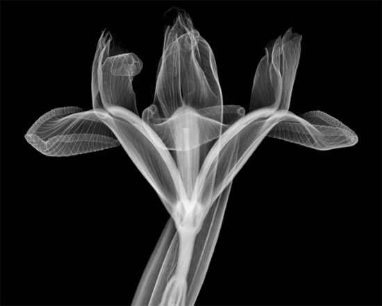 nickveasey xrayphoto6 Absolutely Amazing X Ray Photography By Nick Veasey