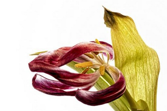 Best Floral Photography