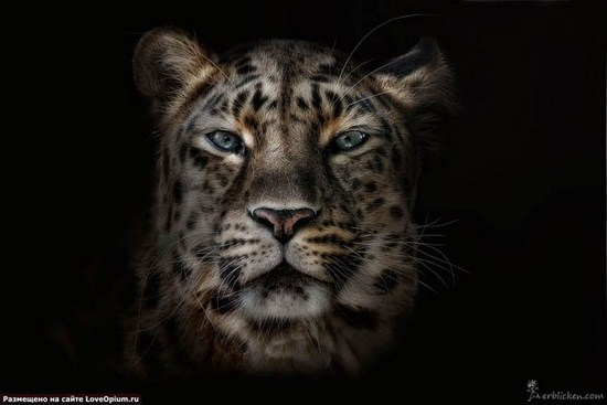 Heart warming Portraits Of Wild Animals