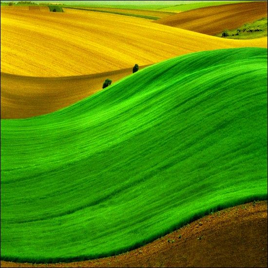 green field landscape photography