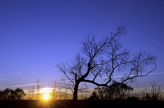 Nature silhoutte photography (4)