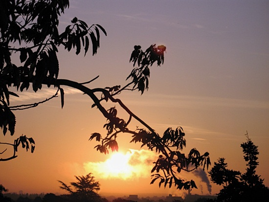 Nature silhoutte photography (5)
