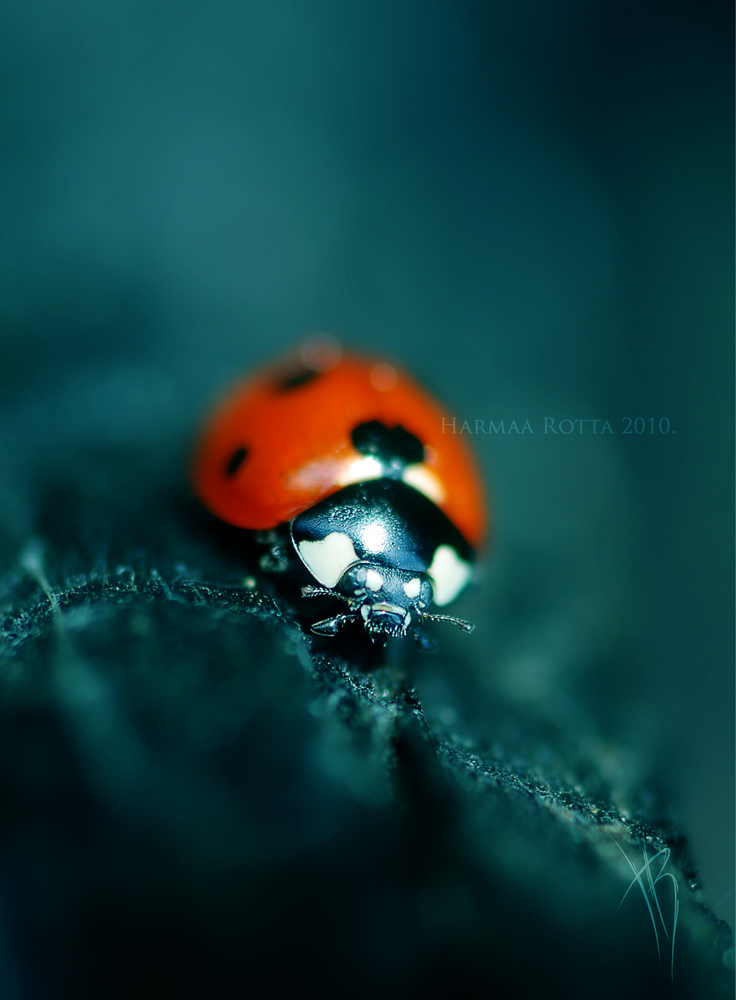 Stunning Macro Photography