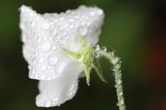 tips Macro Dew Droplets Photography
