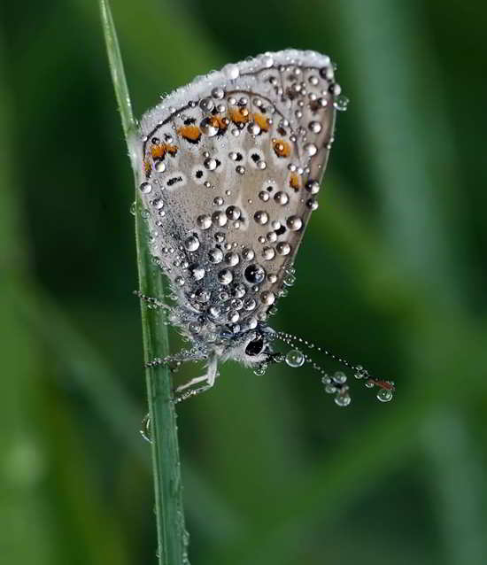 water droplet photography guide