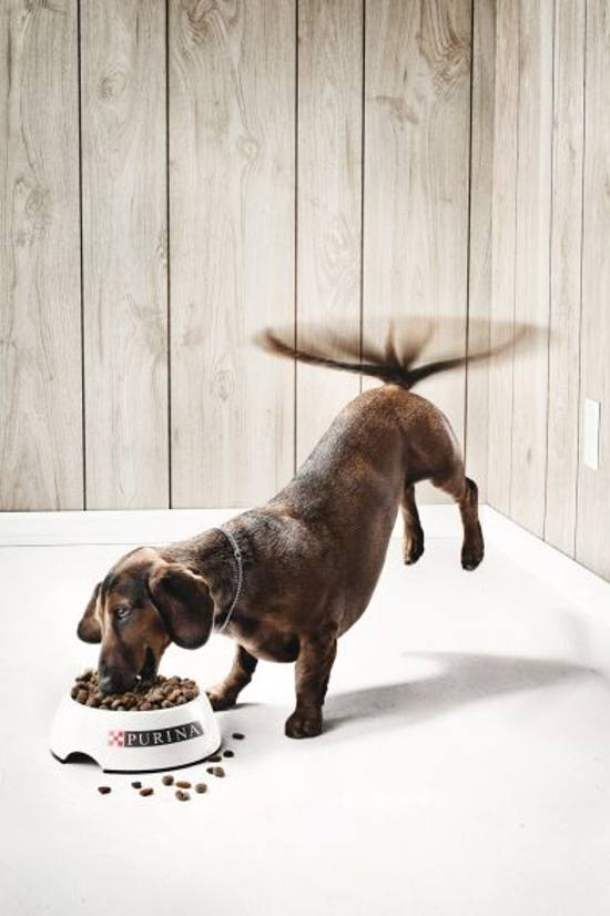 purinal! the dog: print media advertisement