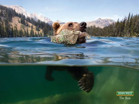 Bear From John West: print media advertisement
