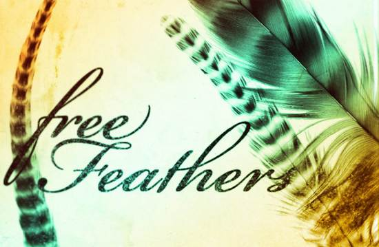 free feathers brushes photoshop