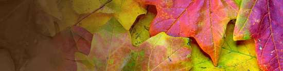 Fall Leaves header