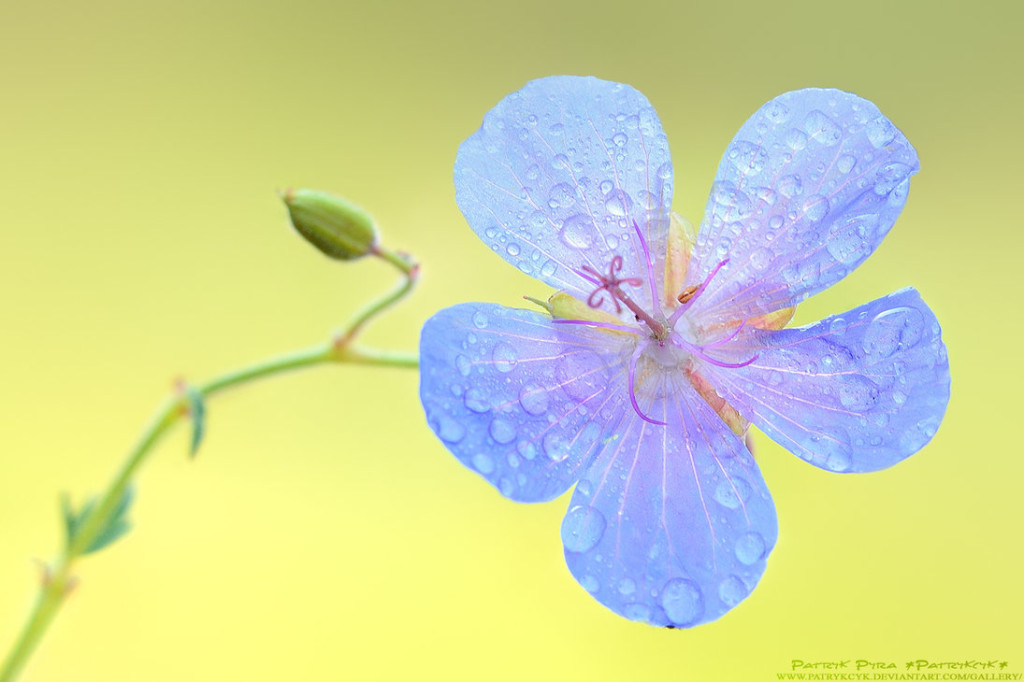 Beautiful Spring Flowers Photography