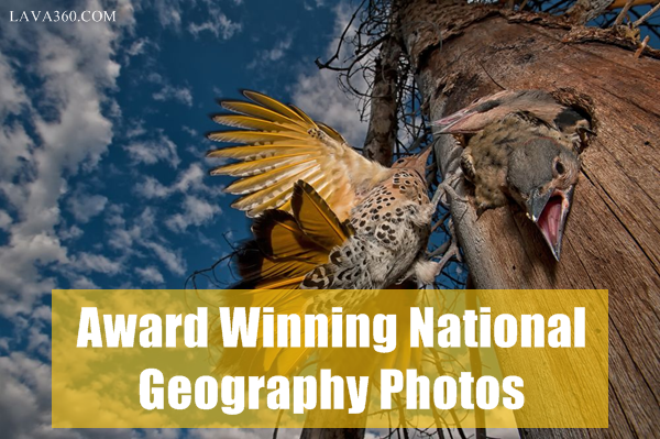 Award Winning National Geography Photos1.1