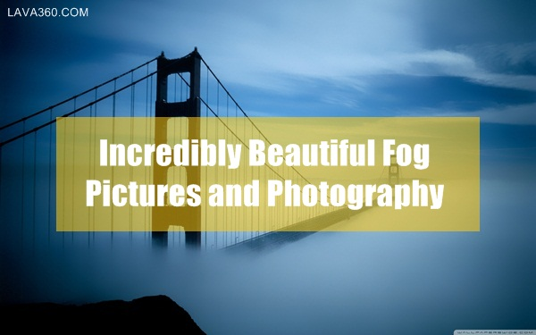 Beautiful Fog Pictures and Photography1.1