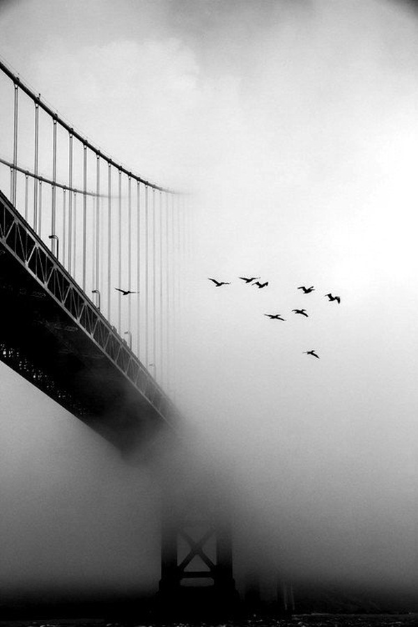 Beautiful Fog Pictures and Photography11