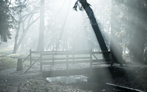 Beautiful Fog Pictures and Photography16