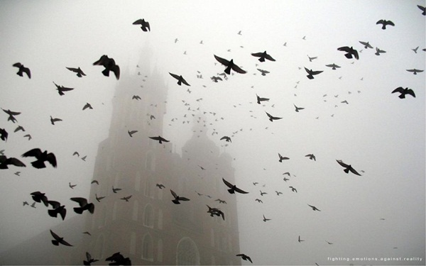 Beautiful Fog Pictures and Photography23