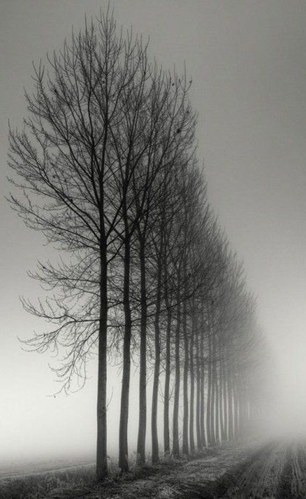Beautiful Fog Pictures and Photography28
