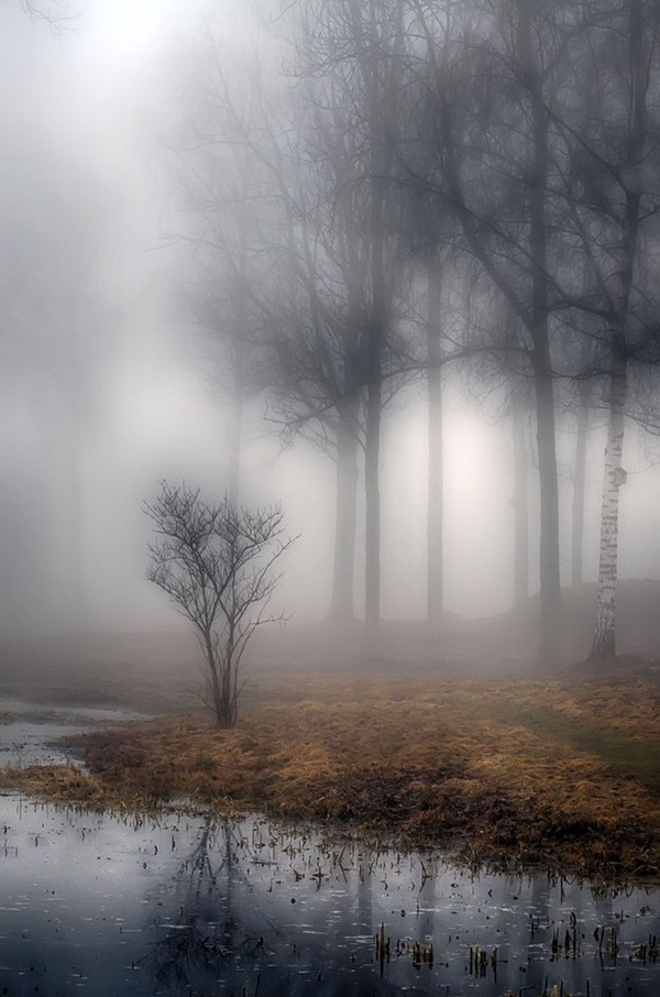 Beautiful Fog Pictures and Photography6