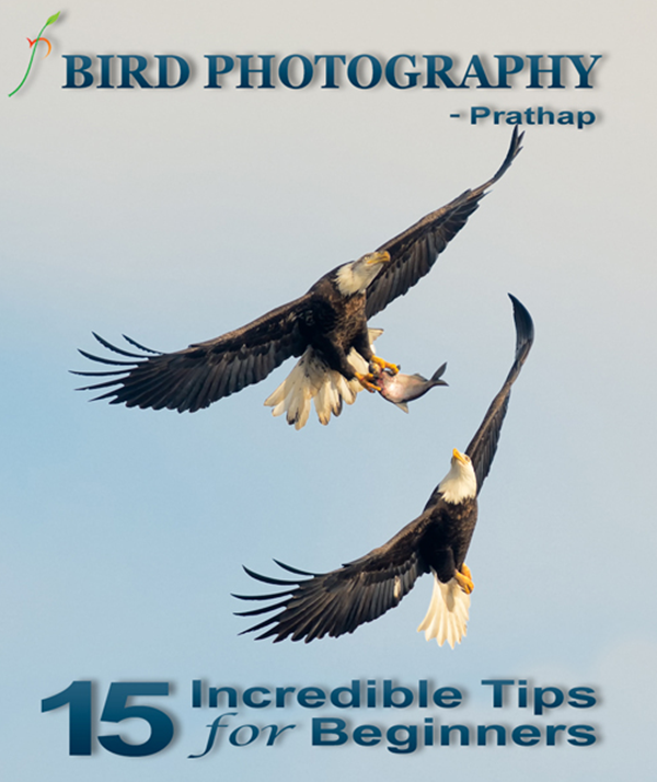 Best Photography eBooks12