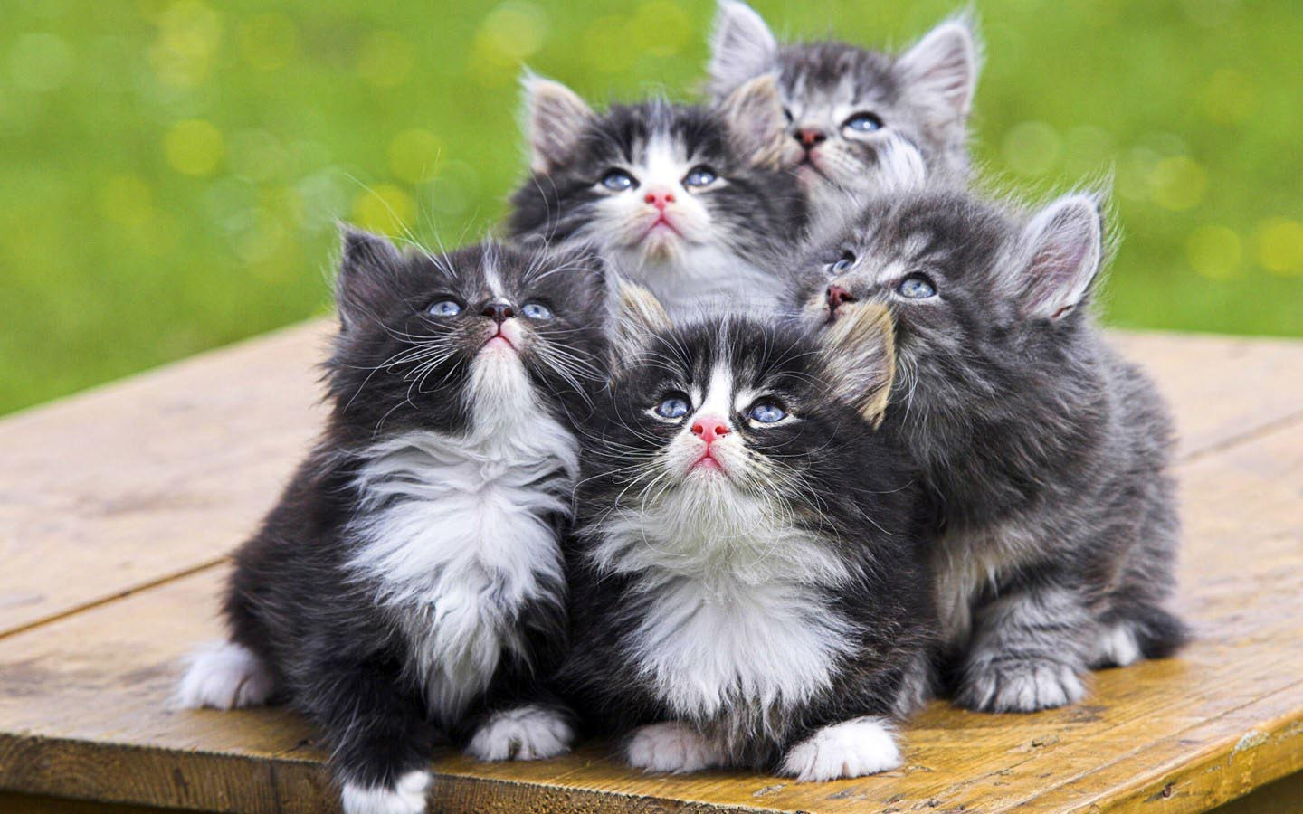 Pictures of Cute Kittes (2)