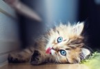 40 Adorable Pictures of Cute Kitties