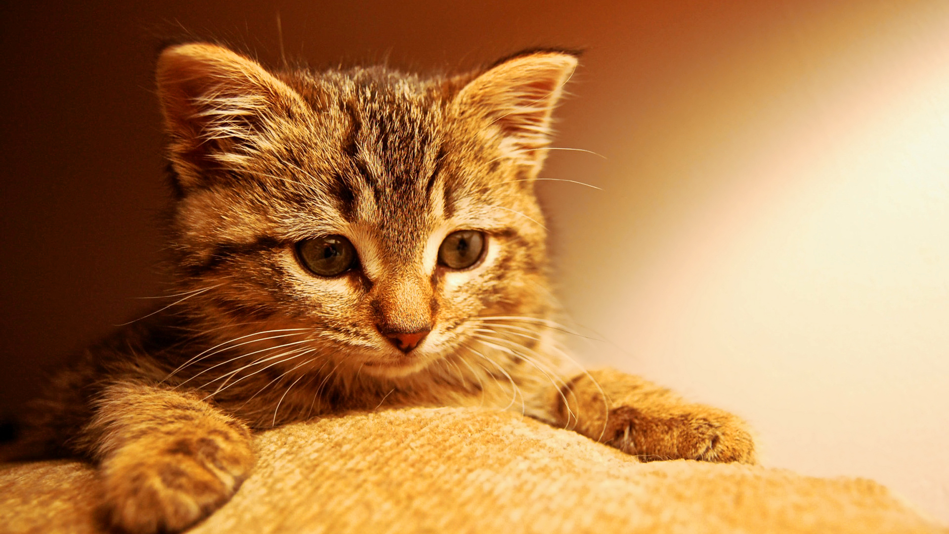 Pictures of Cute Kittes (4)