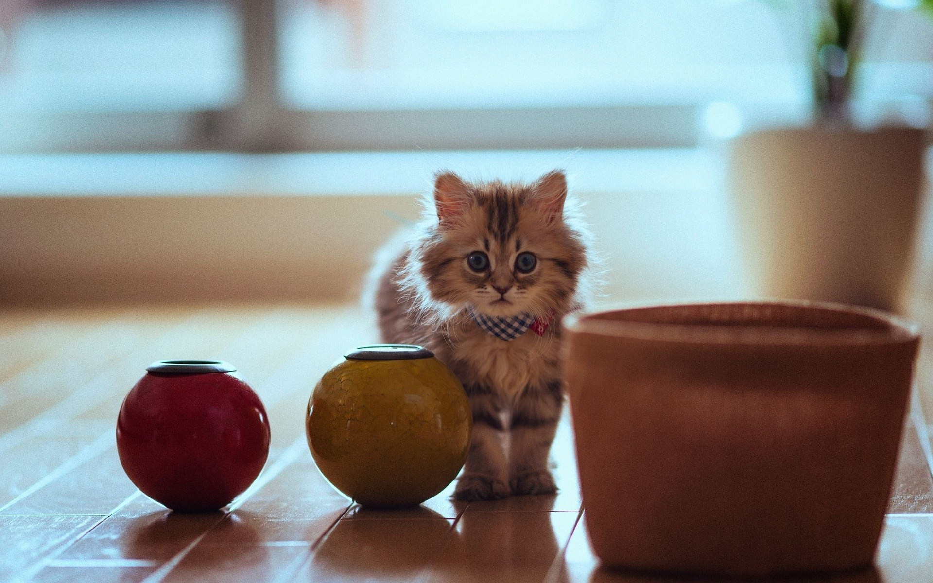 Pictures of Cute Kittes (7)
