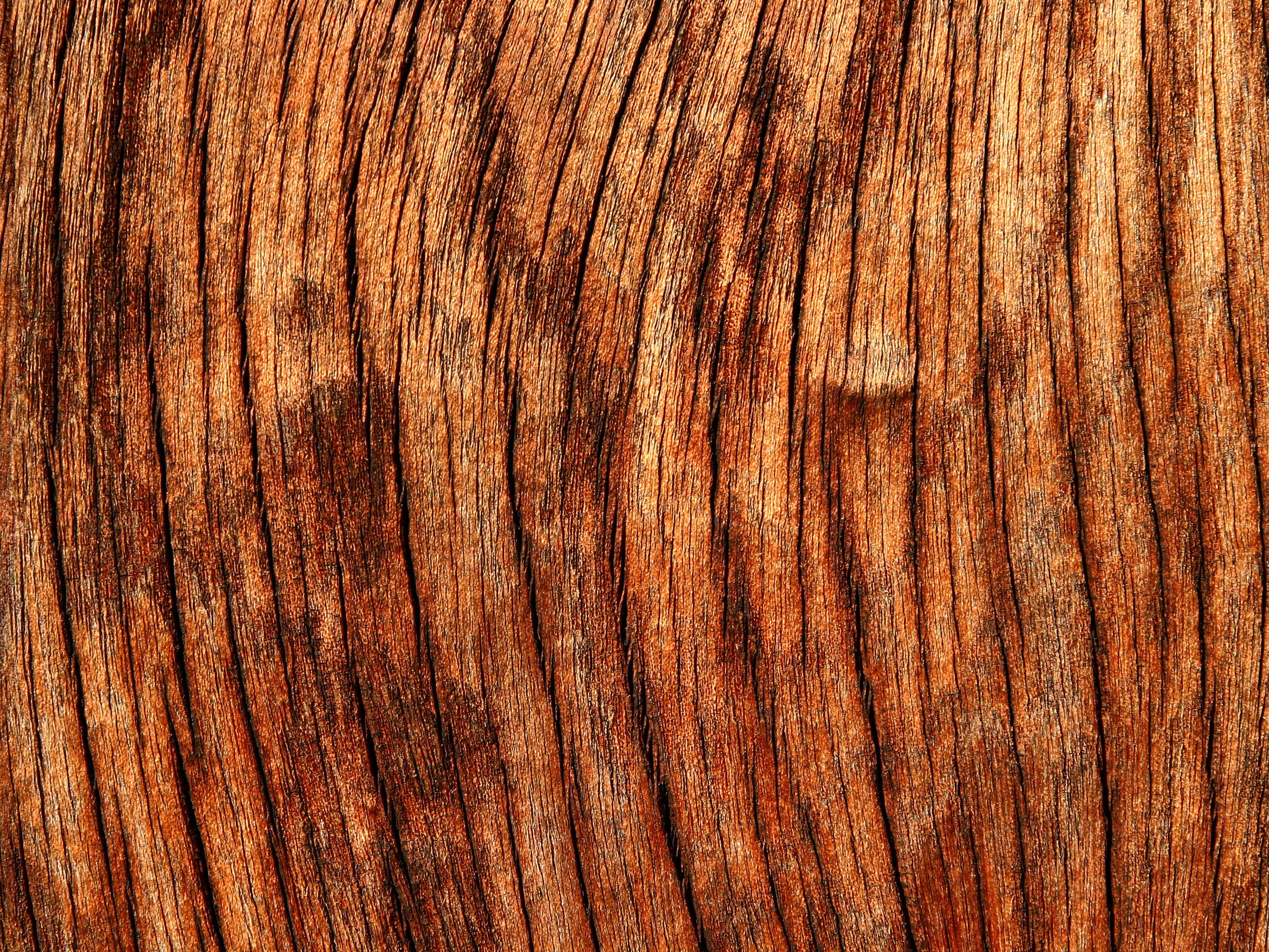 Wooden Textures for Designers (5)