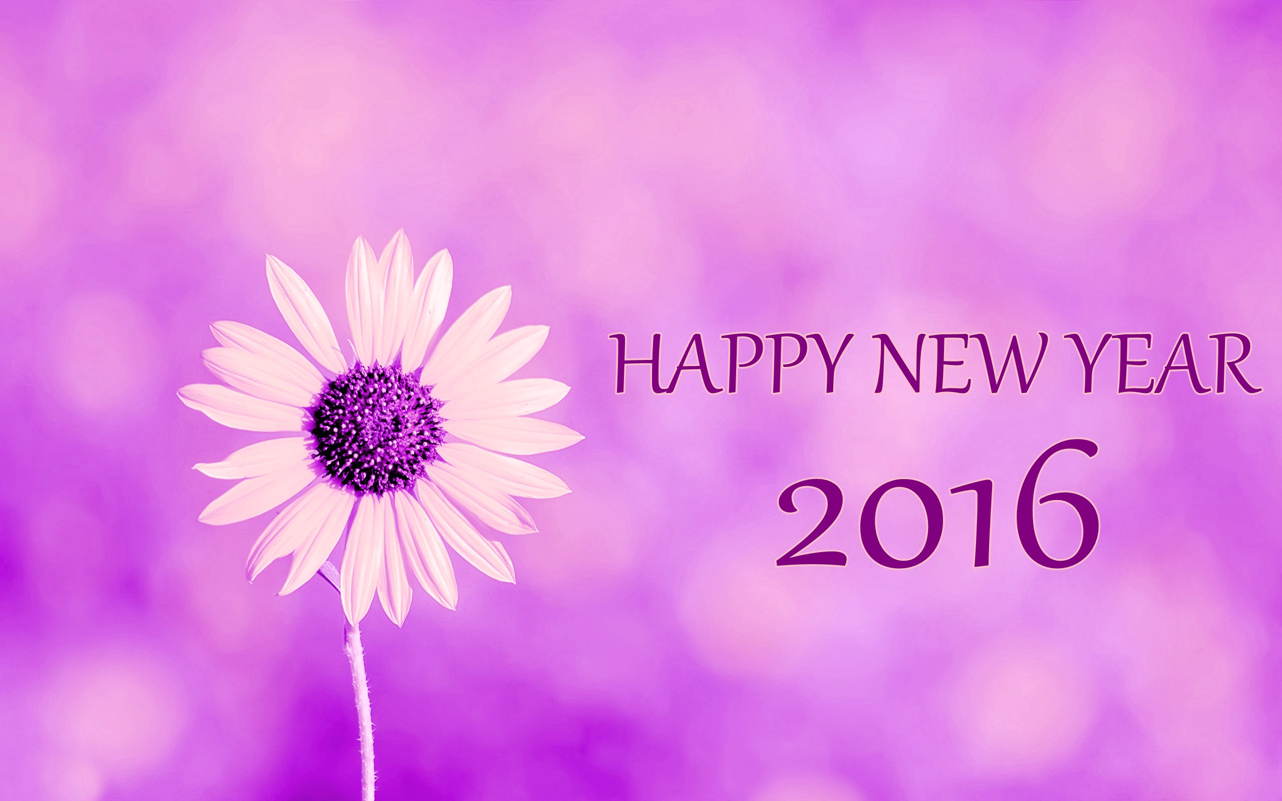 Beautiful Happy New Year Wallpapers HD (12)