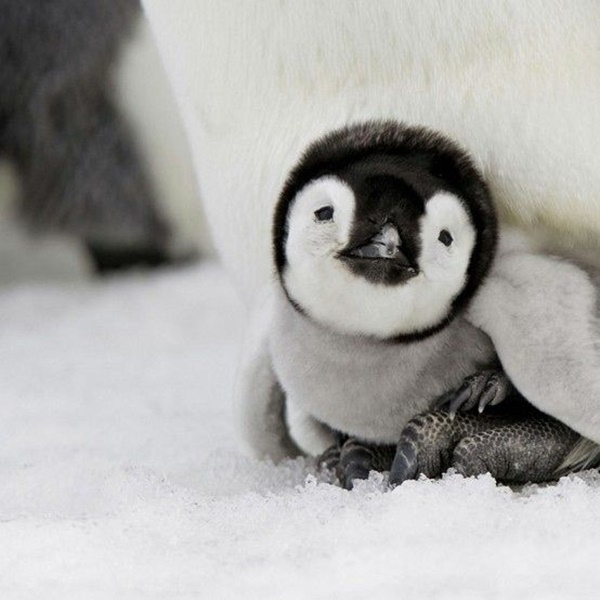 cute baby animal pictures (1)