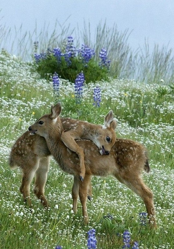 cute baby animal pictures (11)