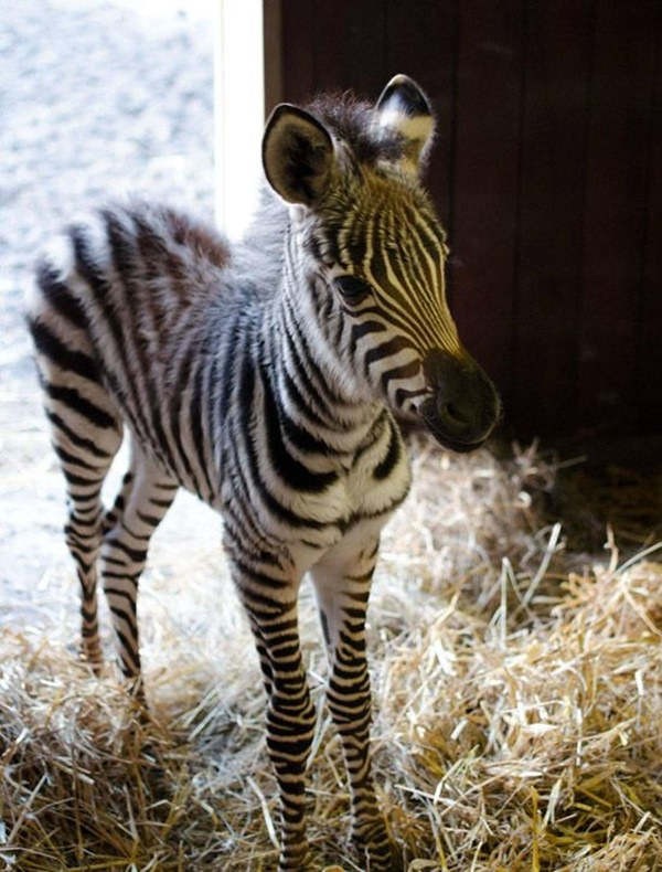 cute baby animal pictures (12)