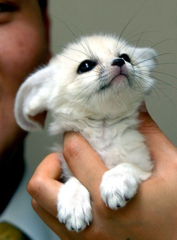 cute baby animal pictures (15)