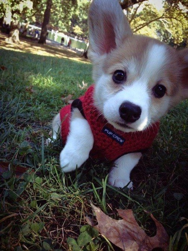 cute baby animal pictures (19)