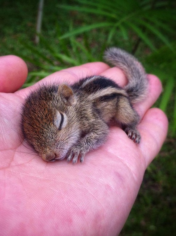 cute baby animal pictures (2)