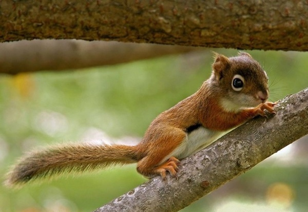 cute baby animal pictures (20)