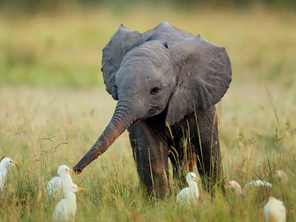 cute baby animal pictures (21)