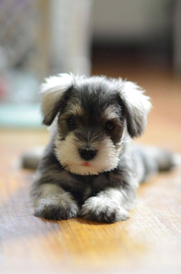 cute baby animal pictures (22)