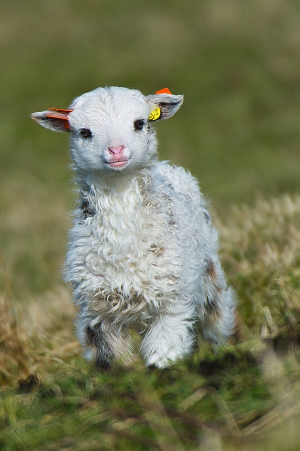 cute baby animal pictures (27)