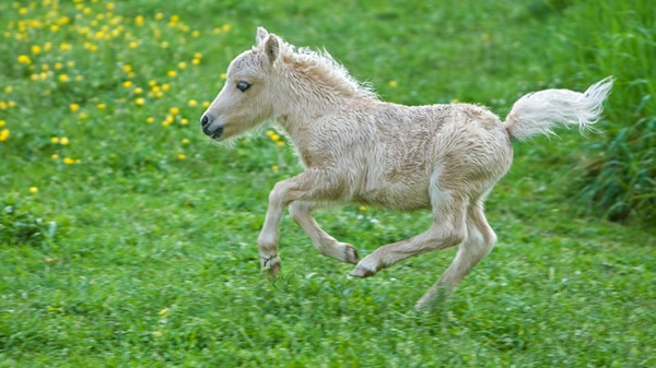 cute baby animal pictures (29)