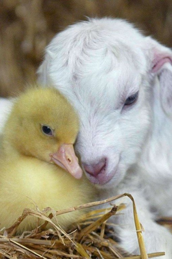 cute baby animal pictures (30)