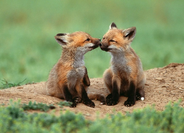 cute baby animal pictures (32)